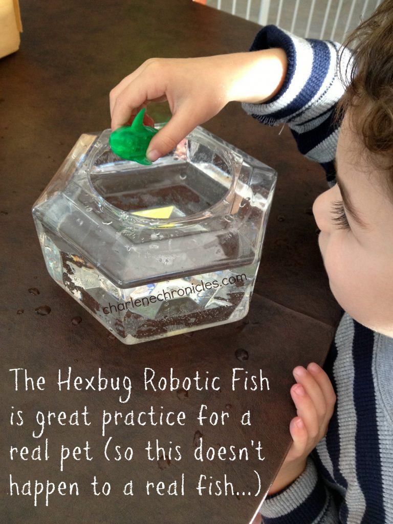 Robotic Fish With Bowl: Hexbug Aquabot